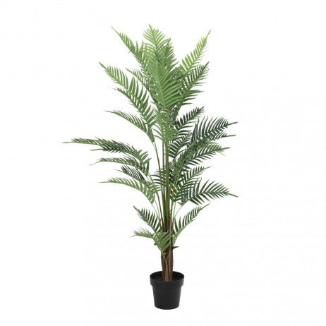 Planta Bambu